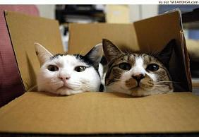 doi-pisici.jpg