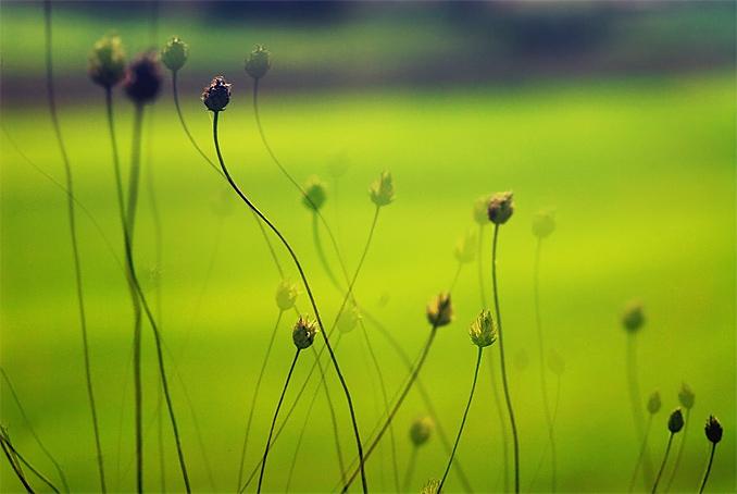 281-2006-04-30_DSC_1965_grass_sm