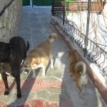 Baghira, Strelka si Liusika