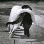 Doi motani cu coade