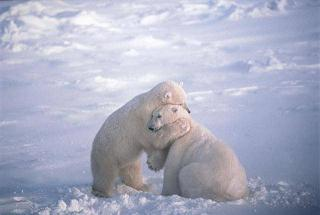 Urs-Wish You Lots of Bear Hugs